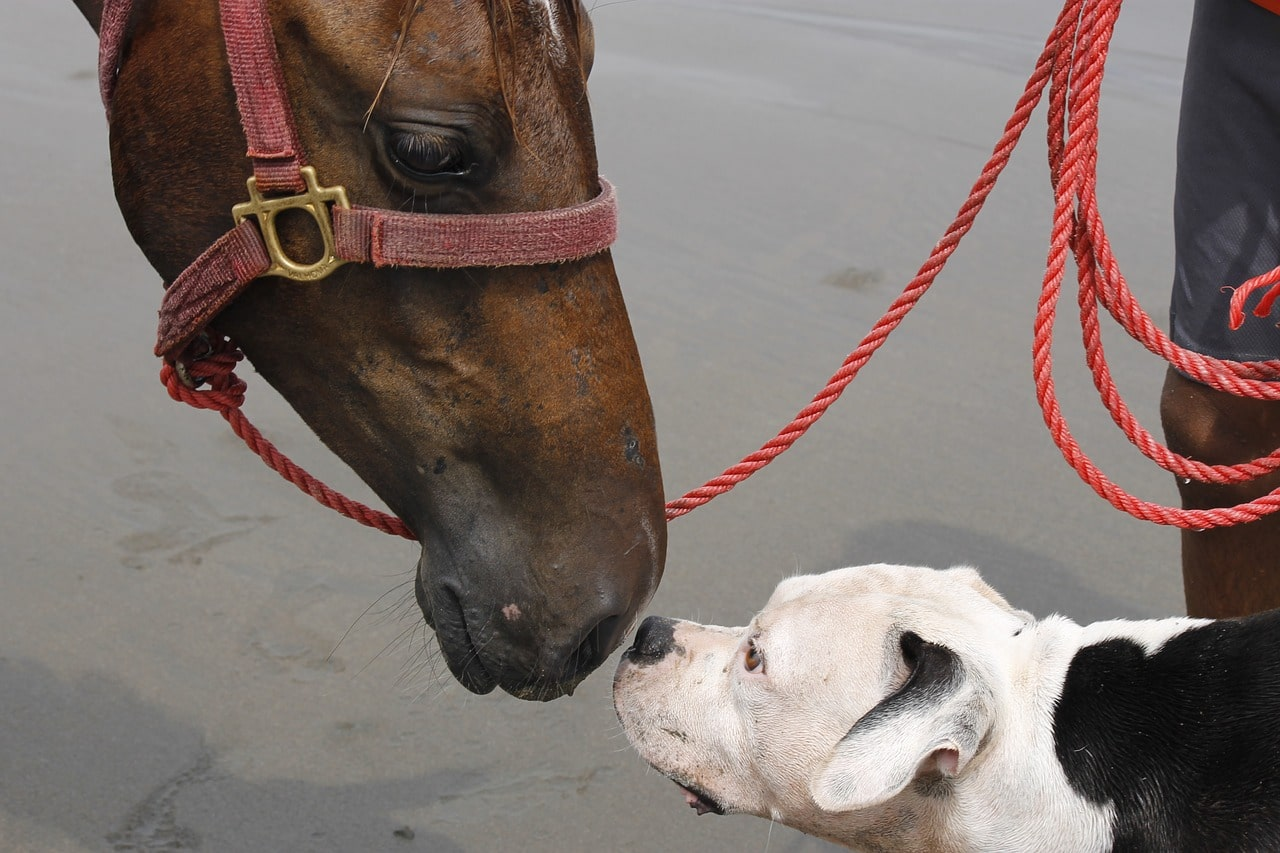 dog and horse, animals, looks